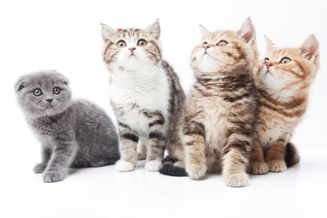 知っておきたい猫の病気!止まらないくしゃみの対処法