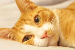 【猫の病気】皮膚の様子がおかしい!よくある症状&原因と対処法
