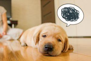 愛犬が血便を出したときはどうする?対応や考えられる犬の病気
