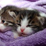 猫の病気の種類とその治療法