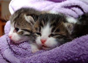 猫を飼うなら注意!猫の病気は人にもうつるので注意が必要!