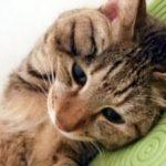 気になる目やにと猫の病気との関係を探る