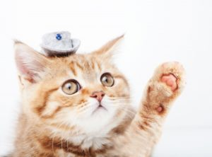 猫のワクチン接種(予防接種)!回数や費用、タイミングなど