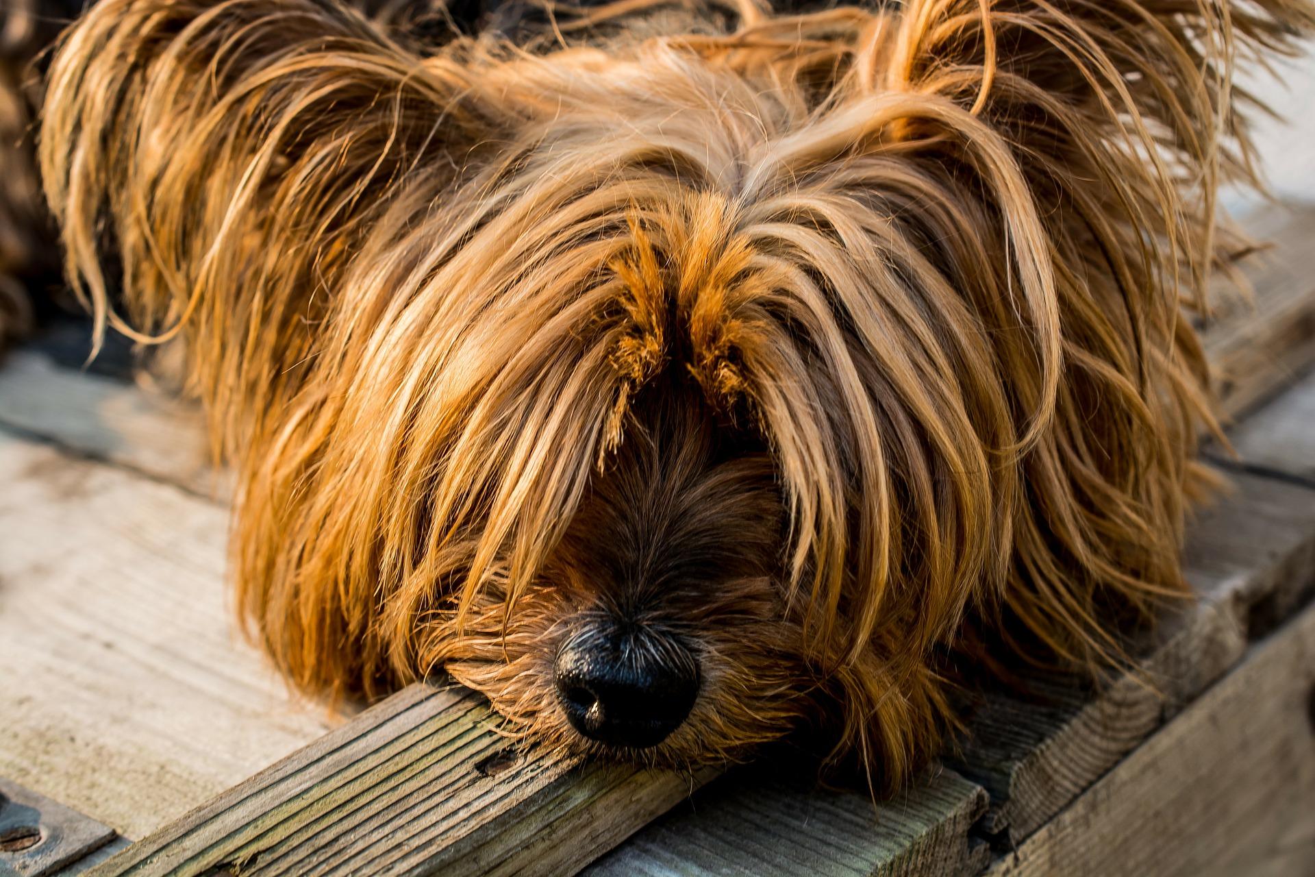 犬の病気のうち目の病気の種類やその原因、予防接種など