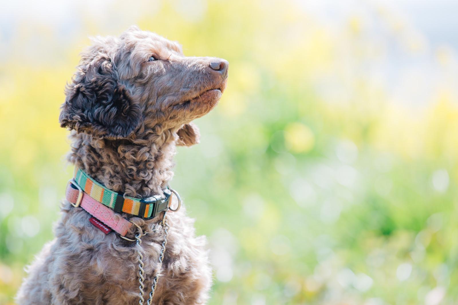 犬の病気の種類はたくさん!予防方法や対策もご紹介