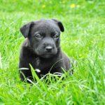 嘔吐をしたらどんな犬の病気が疑われる?原因と治療方法