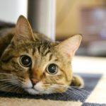 定期的な検診で猫の健康を守ってあげよう!概要、費用、内容など