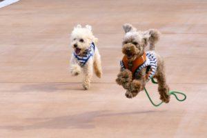 愛犬のために知っておきたい犬の病気「膝蓋骨脱臼(パテラ)」