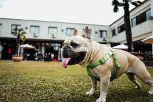 【2019年】福岡市西区の動物病院♪おすすめしたい6医院