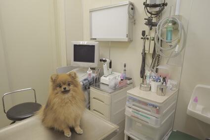 みなみこいわペットクリニック 医療サポートセンターphoto