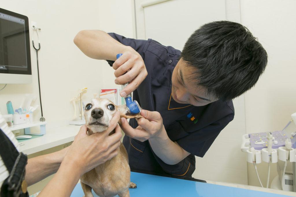 名古屋みらい動物病院photo