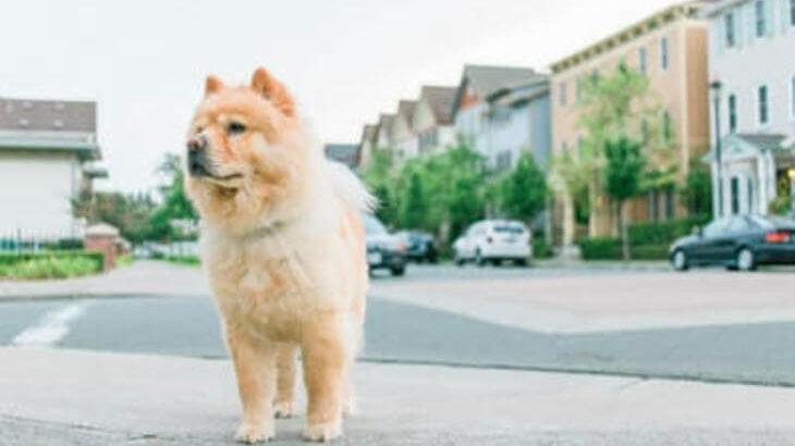【2019年】寝屋川市の動物病院♪おすすめしたい6医院