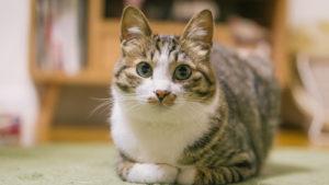 猫のよだれは病気のサイン!?猫の病気について